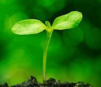 Растениеводство в контексте глобальных технологических трендов
