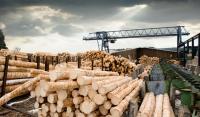 В лесной отрасли края более 300 предприятий