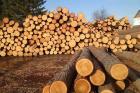 Молодых специалистов привлекают в лесопромышленный комплекс Ульяновской области