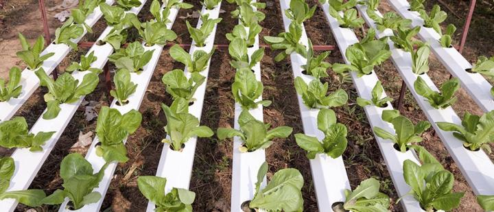 Ботаник Дирк Инзе стал обладателем премии 2017 GCHERA World Agriculture Prize