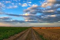 В ЕАО сформируют сельскохозяйственный кластер при поддержке АНО АПИ