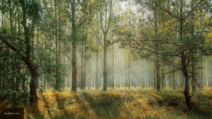 Власти Кубани направят почти 200 млн рублей на восстановление лесов