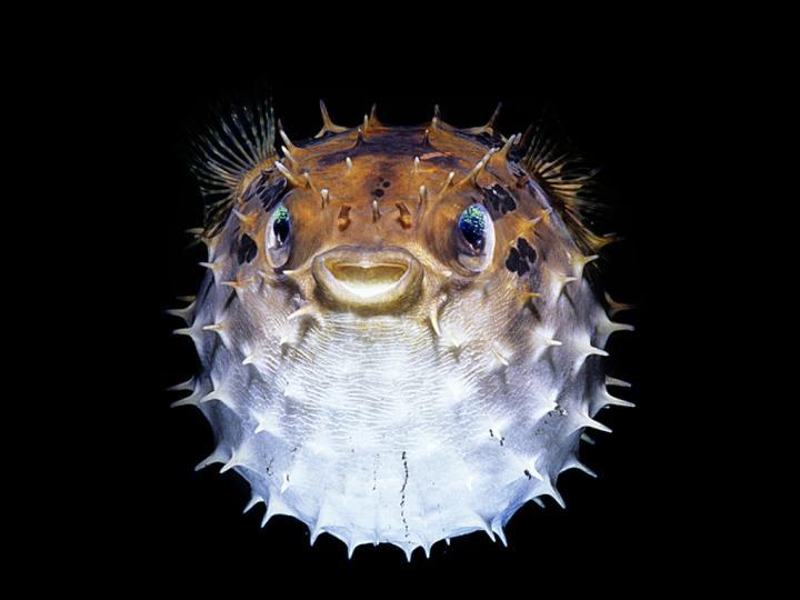 В Мировой океан попадают промышленные химвещества, которые отравляют рыб
