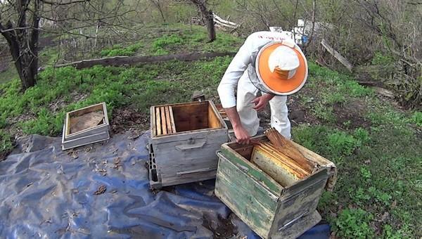 От пестицидов на полях гибнут пчелы и болеют люди
