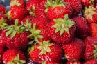 На Ставрополье производство ягод выросло на 30%