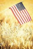USA: Winter Wheat Harvest Accelerated
