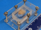 На 3D-принтере напечатали жизнеспособную печень