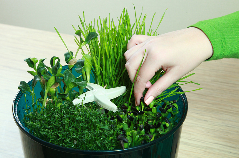 Выращивание еды в домашних условиях 3