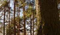Тверская область приобретет технику и оборудование для лесовосстановительных работ