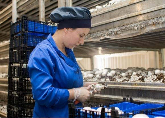 На Кубани реализовали инвестпроект по строительству грибного комплекса