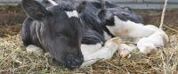 Минсельхоз Удмуртии выделит субсидии на эмбрионов крупного рогатого скота