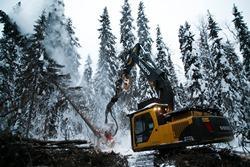 В 2019 году ГК «Титан» заготовила более 4 млн кубометров древесины