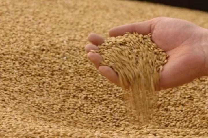 Тамбов: регион увеличил экспорт продукции АПК на 32%