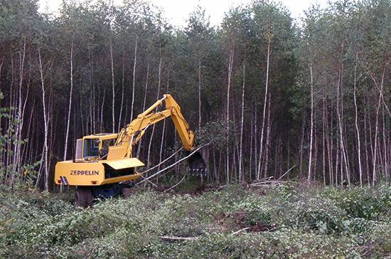 За приобретение древесины у «чёрных лесорубов» могут ввести ответственность