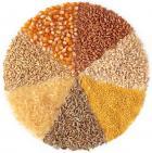 Продам зерновые. Оптовые поставки