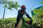 Ярэнерго в 2021 году выполнит расчистку просек на 40% больше запланированного объема