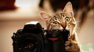 10 способов сделать фото для интернет-магазина самостоятельно