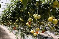 В Краснодарском крае начинающие фермеры получат гранты на развитие