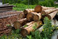 Владельцы ДВ-гектаров смогут получить до 200 кубометров леса для строительства своего дома