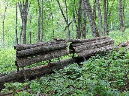 Радий Хабиров: «Производство в лесной промышленности у нас выросло на 30%»