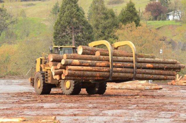 Как не сгубить лесной экспорт