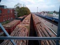 Запрет на экспорт леса-кругляка предложили отменить