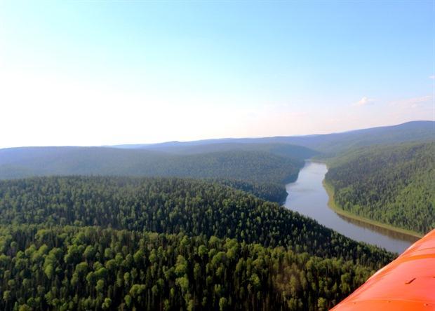Красноярский край приступил к большим лесным проектам