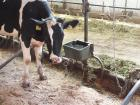 Средства по уходу за сельскохозяйственными животными представят на ВДНХ