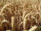 Russia's Top 3 Grain Importers